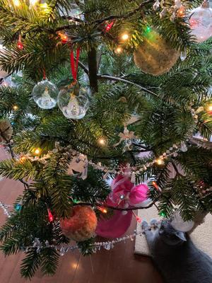 クリスマスツリーの下に猫がいます。 - Li f e l o g