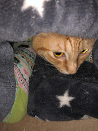 私物化 - 愛犬家の猫日記