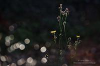 光の妖精たちと。。。 - It's only photo 2