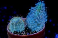 Cactus - え~えふ写真館