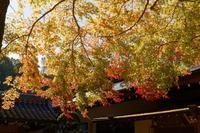 紅葉~楠妣庵観音寺 - katsuのヘタッピ風景