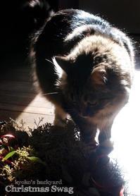クリスマススワッグと猫柄ラッピングペーパー(と猫) - Kyoko's Backyard ~アメリカで田舎暮らし~