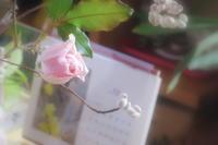 バラが咲いた - 長女Yのつれづれ記