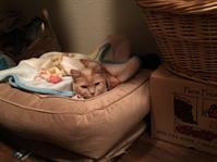 リリー猫の隠れ家 - ちょっと田舎暮しCalifornia