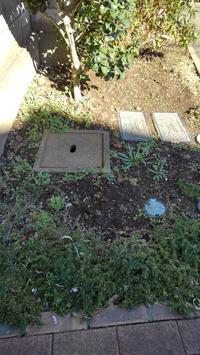 年内最後の草取り - うちの庭の備忘録 green's garden