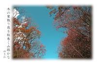 木の葉散るその⑧ - ゆきおのフォト俳句