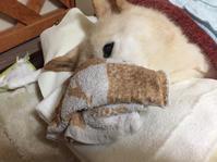 焦った朝 - 老犬。犬生これから。たまに猫