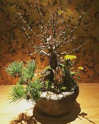 お正月盆栽・苔玉作り - Kitowaの日々