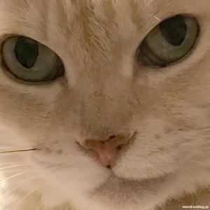 そっちをみないようにしている - 賃貸ネコ暮らし|賃貸住宅でネコを室内飼いする工夫