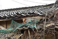 日本海(店)猫 - ちわりくんのありふれた毎日II