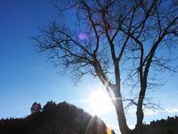 ツバキの開花 - 千葉県いすみ環境と文化のさとセンター