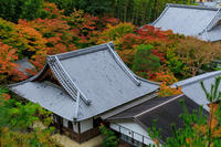 京の紅葉2018圓光寺の錦色 - 花景色-K.W.C. PhotoBlog