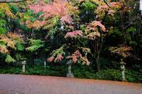 香取神宮の参道で - ぶらり散歩 ~四季折々フォト日記~