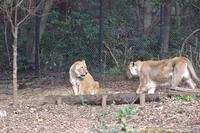 仲良し姉妹の連続写真 - 動物園へ行こう