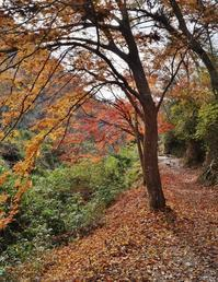 天野川沿いの紅葉 - たんぶーらんの戯言