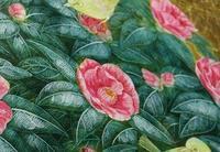 30号・椿 - 絵と庭