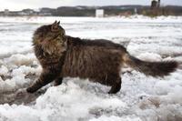 海辺猫たち - ちわりくんのありふれた毎日II