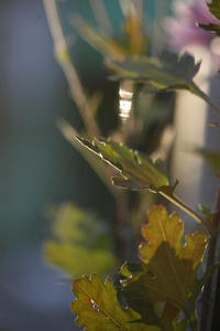 今日の向島百花園この時期、お花の見頃情報の数が少なくなってるのがさびしい。 - みるはな写真くらぶ
