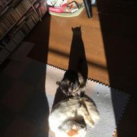 陽だまりに集まる。 - ぶつぶつ独り言2(うちの猫ら2018)