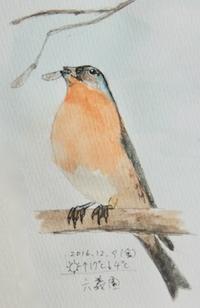 #野鳥スケッチ #ネイチャー・ジャーナル 『アトリ』 - スケッチ感察ノート (Nature journal)