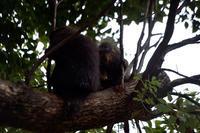 眺めるロータス - 動物園へ行こう