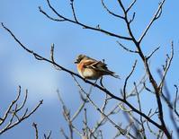 今日の鳥さん181212 - 万願寺通信
