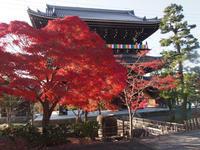 京都の秋を楽しみました。 ~ 光明寺・真如堂 ~ - ご無沙汰写真館