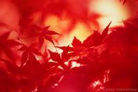 紅(くれない) - M2_pictlog