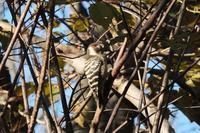 ■なさけない鳥写真18.12.19 - 舞岡公園の自然2