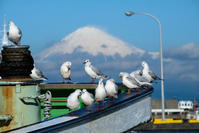 カモメと富士山 - 長い木の橋