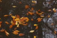 落ち葉のロンド(輪舞曲) - 風の彩り-2