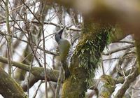 こけいろ - 可愛い野鳥たち 2