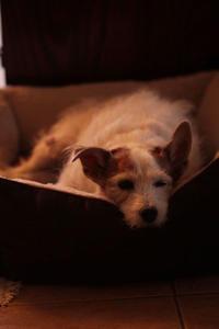 ビスケットのクリスマス便り - クローバーのLife is cozy