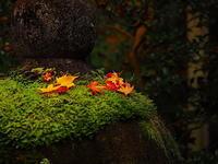 一握の秋の音 - 風の香に誘われて 風景のふぉと缶