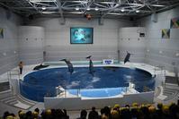 かごしま水族館に行って来ました②イルカの時間 - 動物園でお散歩
