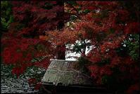 DIC 川村美術館 - Camellia-shige Gallery 2