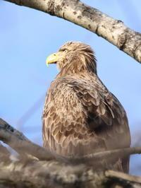 今日の沼 - 今日の鳥さんⅡ
