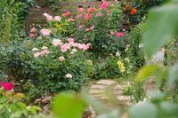 小さなローズガーデンの12か月・・6月 - 季節の風を追いかけて