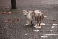 外で見かけた猫 - KAHO's Photo Diary 2