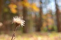 年の瀬の森 - つれづれ日記