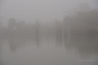 冬霧の朝@ 水上池 - 東大寺が大好き