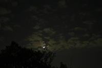 夜の散歩(4cut) -     ~風に乗って~    Present
