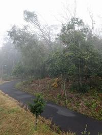 霧の朝 - はっぴー ばい まいせるふ