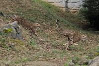 リリーっ仔3姉妹のやり取り - 動物園に嵌り中