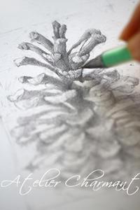 一周回ってデッサンから - Atelier Charmant のボタニカル・水彩画ライフ