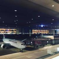 早朝の羽田空港 - 猫と、旅する猫用カメラ