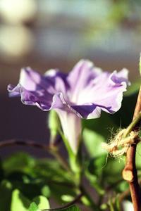 12.22 - anemone