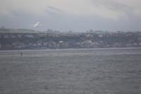 雨降る中~函館空港~ - 自由な空と雲と気まぐれと ~from 旭川空港~
