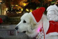 ワンダフル・クリスマス梅田スカイビルドイツクリスマスマーケット - リズムのある暮らし