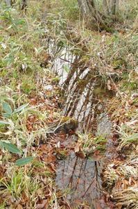 雪が降る前に - 森と水の記憶